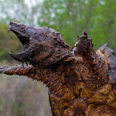 Crazy Tales of Golf Ball Diving - Snapping Turtle