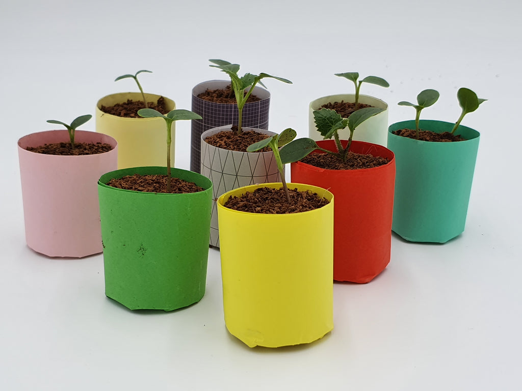 Paper Pot Maker | The Classic Tool for Eco Gardeners