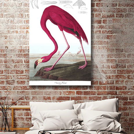 John J. Audubon Birds of America, American Flamingo – Poster on Metal