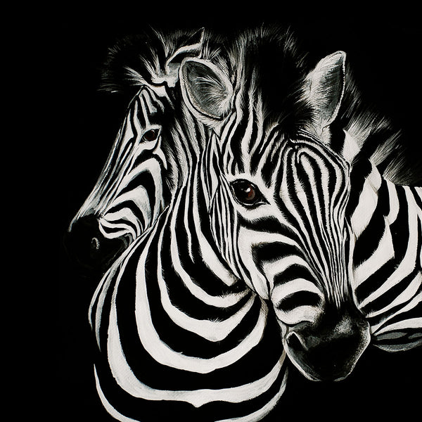 Black/White Zebras Painting, Metal Poster