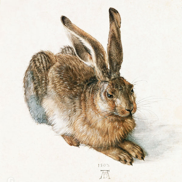 Albrecht Dürer Young Hare Rabbit Animal – Reproduction Printed on Metal