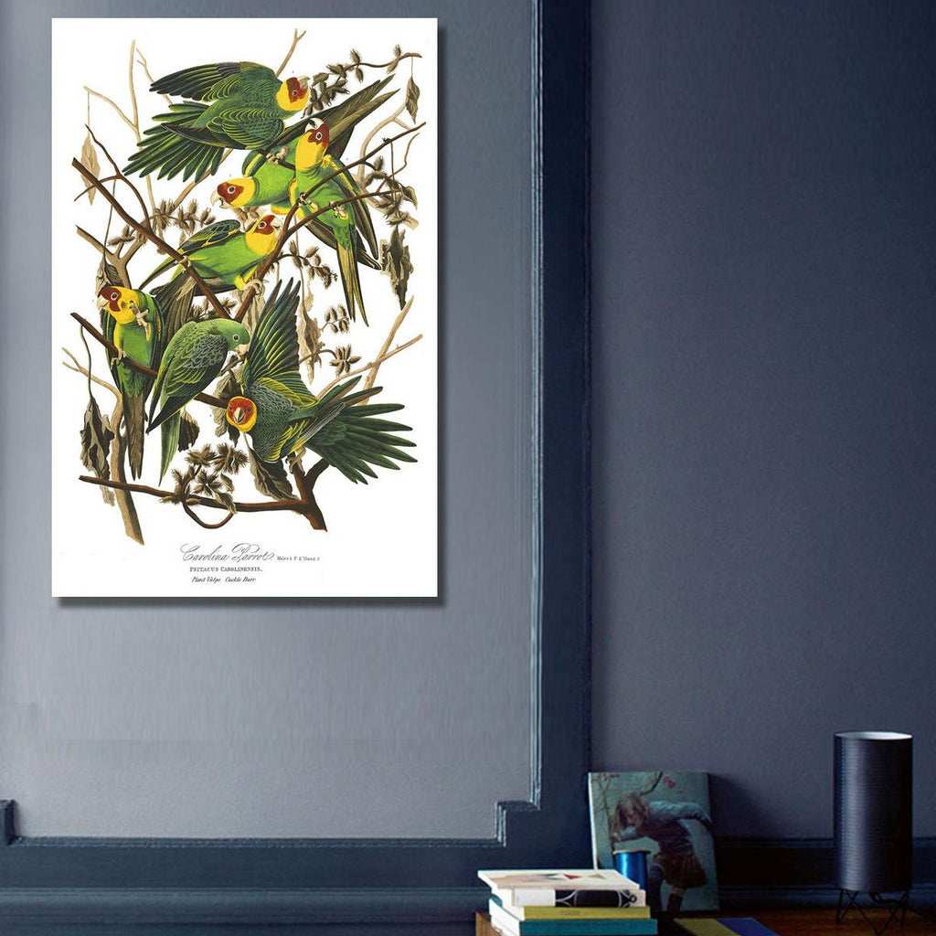 Birds of America, Carolina Parrot – Vintage Metal Poster