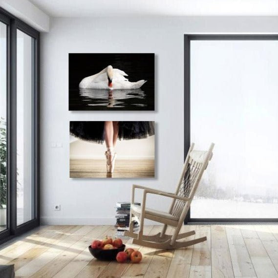 White swan, Modern Wall Art – Photo on Metal
