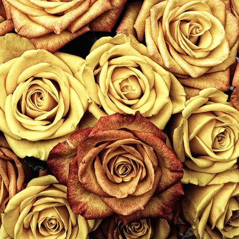 Vintage Yellow Roses Pattern – Modern Art-New Art Studio-newARTmix