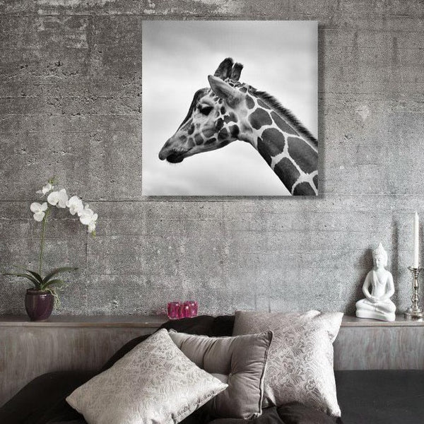 Meditative giraffe – Black/White Photo on Metal