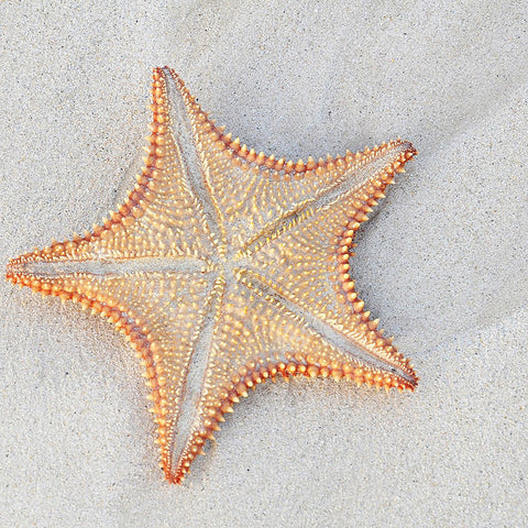 Starfish on Sand Summer Mood  – Large Modern Art – Photo on Metal