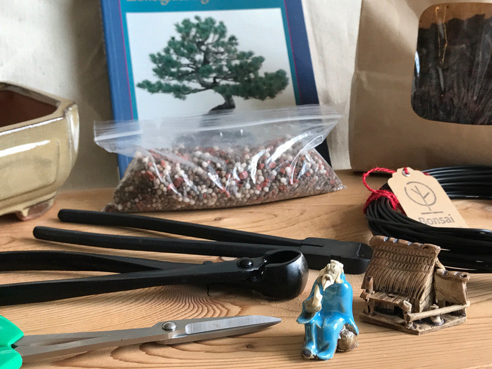 Deluxe bonsai gift set
