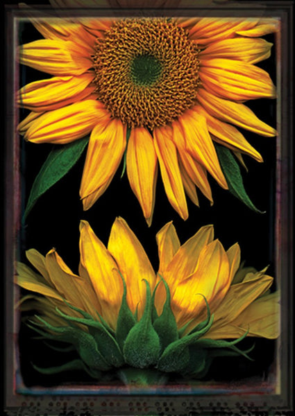 Sunflowers On Black Garden Flag