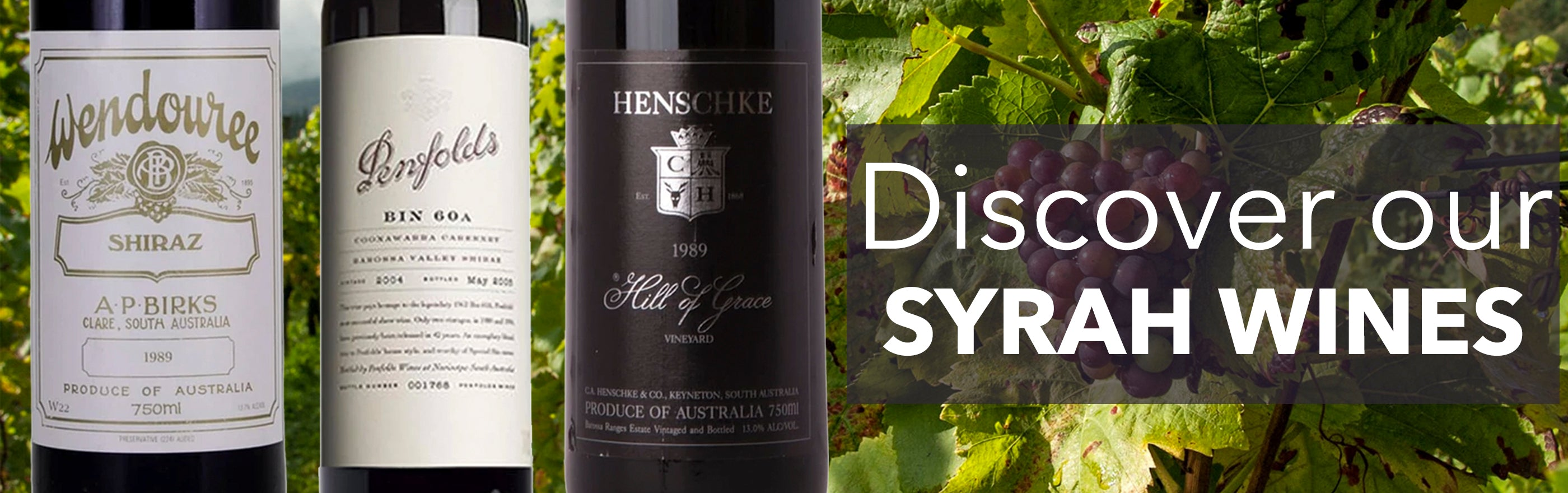 Buy Syrah/Shira wines online
