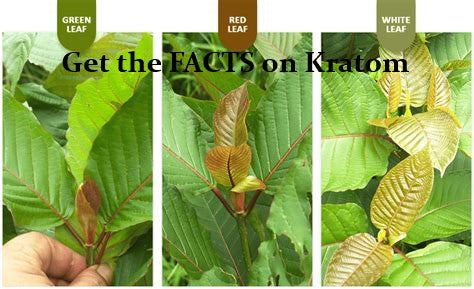 Questions About Kratom? Get the FACTS!