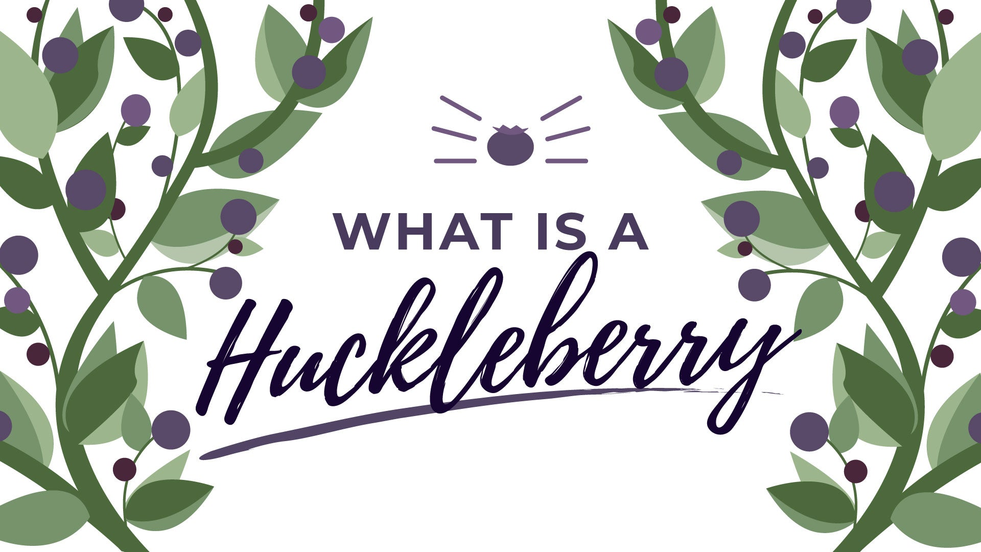 What is a Huckleberry? And other FAQ from Montana Gift Corral, the #1 seller of Huckleberry Gifts