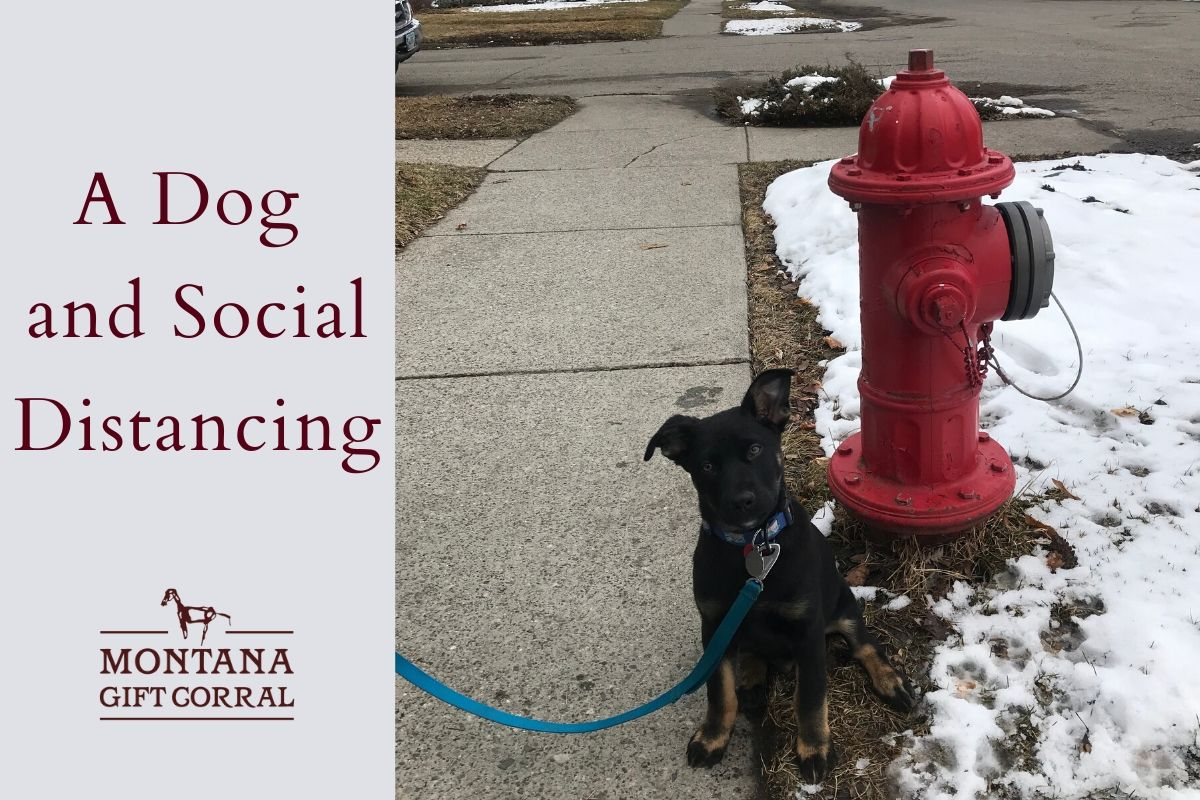 A Dog and Social Distancing