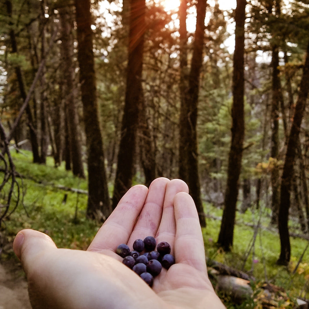 huckleberries in hand