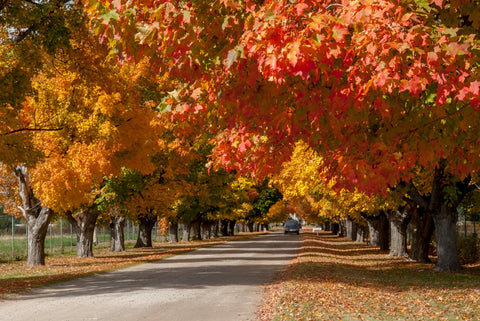 Hamilton, Montana. Beautiful Fall Foliage of Southwest Montana