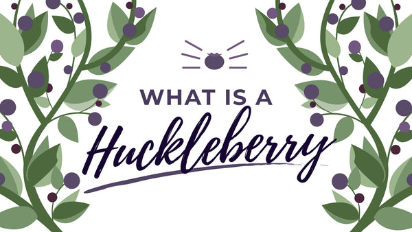 What is a huckleberry blog article thumbnail