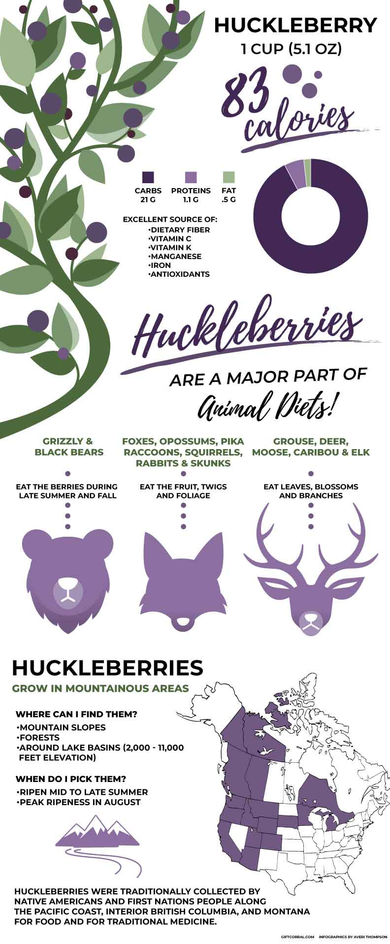 Huckleberry infographic by Montana Gift Corral