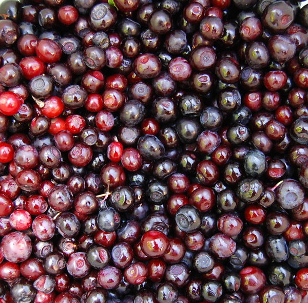 Image of huckleberries from MTPR