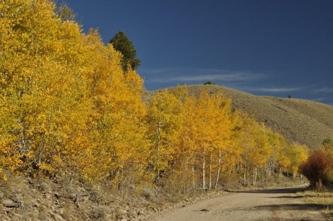 Pioneer Mountain Scenic Byway. Near Polaris and Wise River. Beautiful Fall Foliage in Southwest Montana