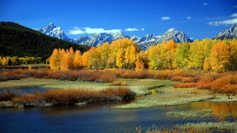 Fall Foliage of Montana