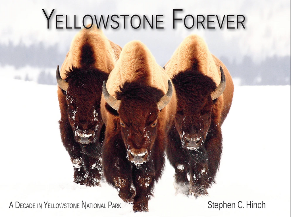 A decade in yellowstone with Stephen hinch