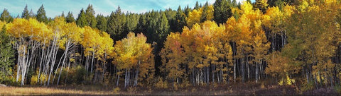 West Yellowstone Autumn Colors. Best Southwest Montana Fall Road Trips
