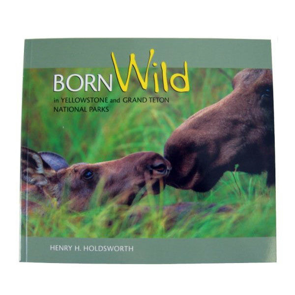Born Wild in Yellowstone and Grand Teton National Parks by Henry Holdsworth