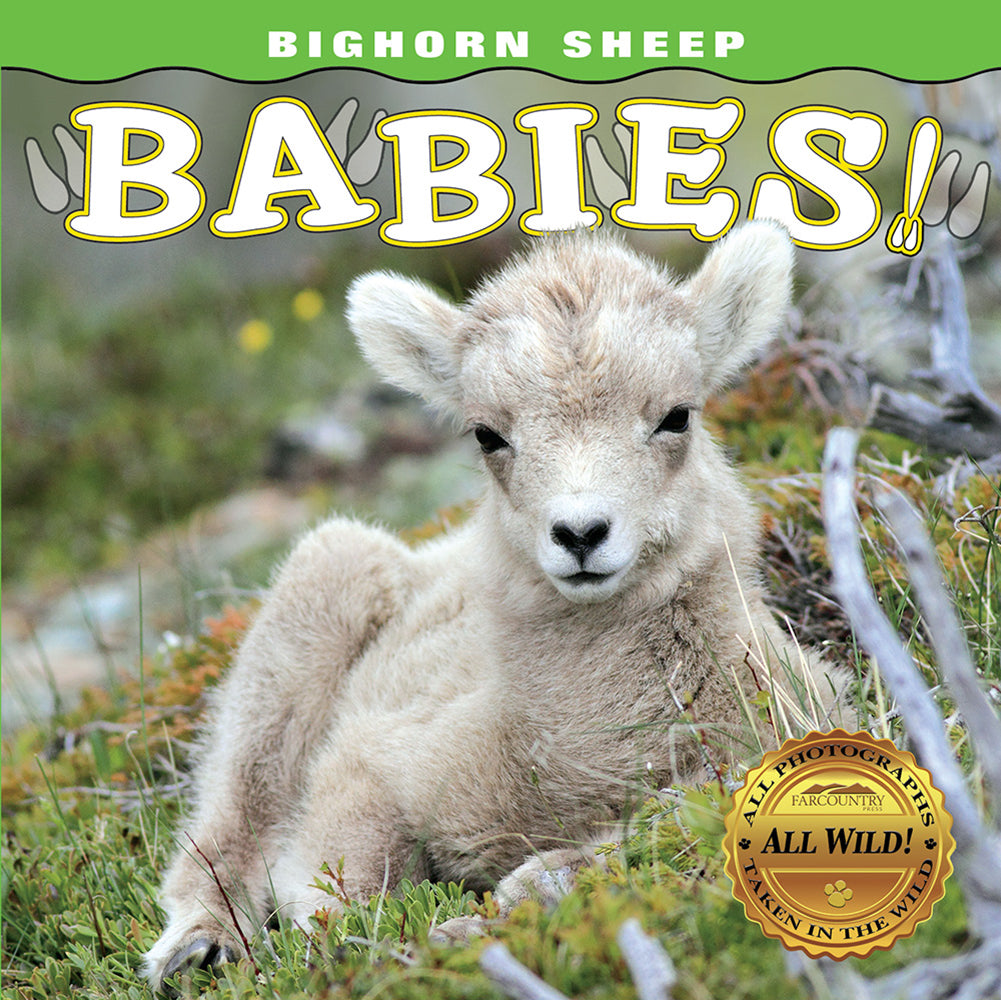 Bighorn Sheep Babies! by Farcountry Press Photography by: Sumio Harada, Steve Hinch, Don Johnston, Donald M. Jones, and Brett Swain at Montana Gift Corral