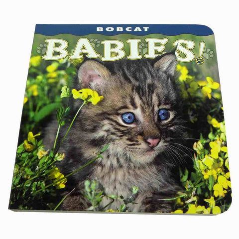 Bobcat Babies Book by Lisa Husar