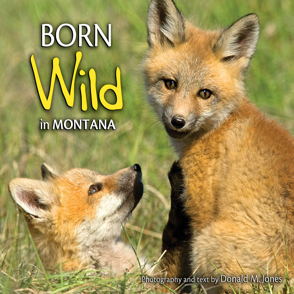 Born Wild in Montana by Donald M. Jones