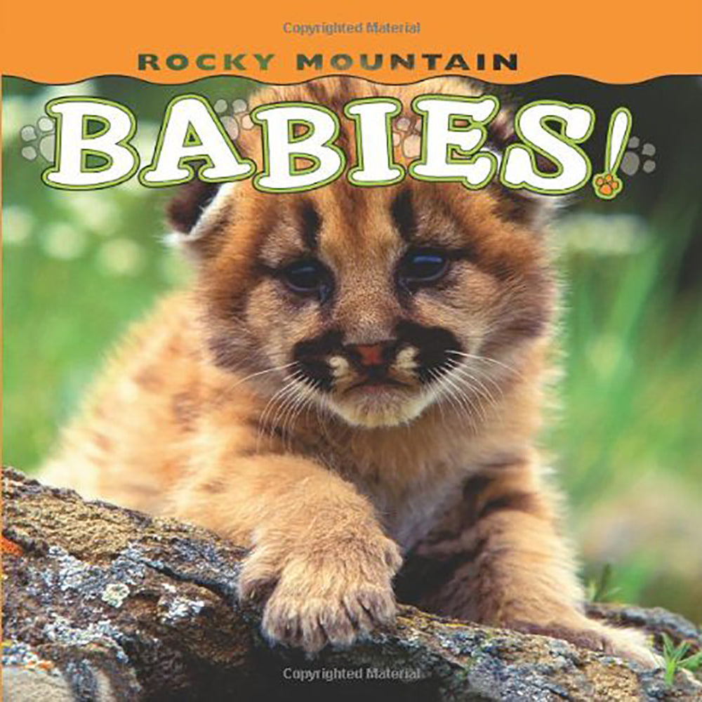 Rocky Mountain Babies by Wendy Shattil & Bob Rozinski
