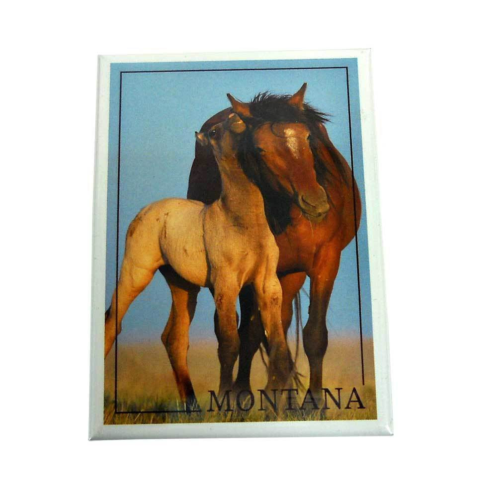 Wild Horse and Young Montana Magnet