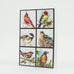 Wild Bird Collage Bird Watercolor Greeting Cards by Dean Crouser from Montana Gift Corral