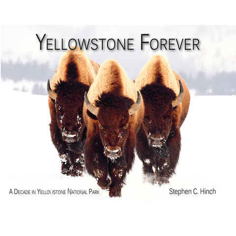 Yellowstone Forever: A Decade in Yellowstone National Park by Stephen C. Hinch
