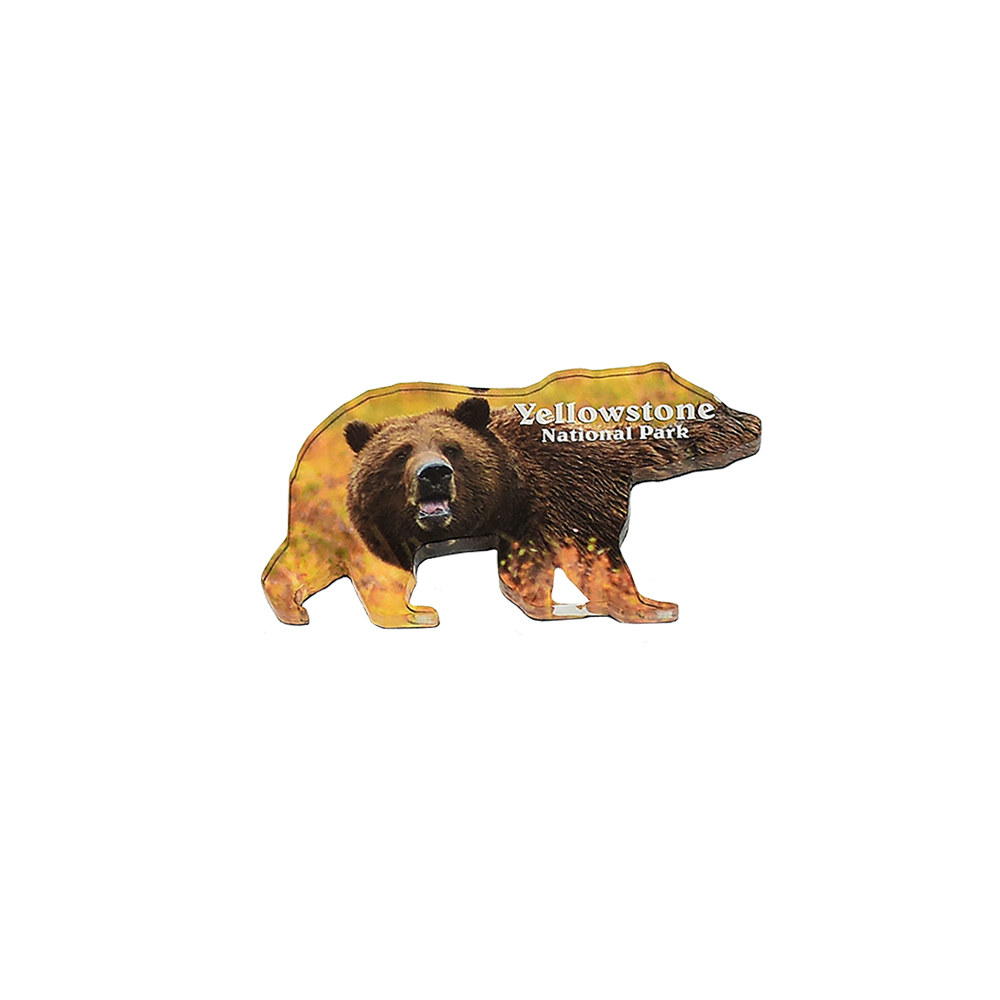 MT Grizzly Bear Lucite Magnet by The Hamilton Group