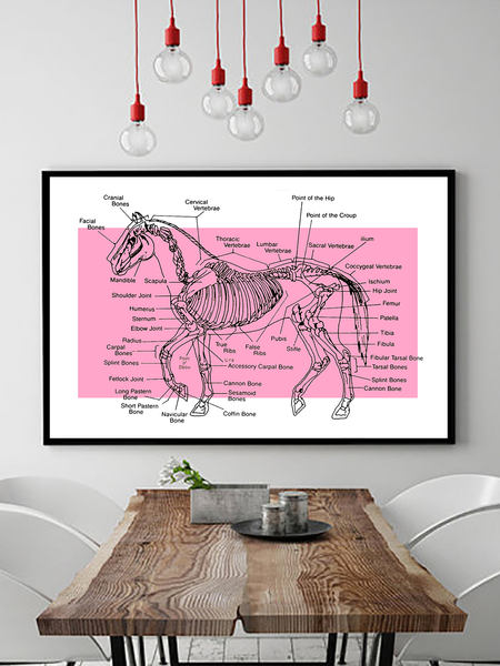 Horse Poster - Colorblock Wall Art - Colorblock Art - Horse Anatomy Chart - Retro Horse Poster - Farmhouse Decor - Barn Decor - Living Room Decor - Bedroom Wall Art - Vintage Wall Art - Vintage Horse Poster - 70s Poster - Tumblr Art - Boho Decor - Neon Decor - Neon Wall Art - Tumblr Decor - Tumblr Aesthetic - Vintage Aesthetic - Retro Wall Art - Retro Decor