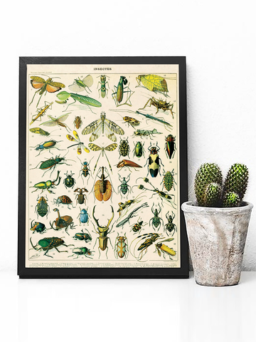 Insect Entomology Beetle Poster Print | Beetle Chart Wall Art - Clarafornia