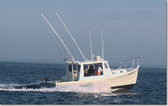 1. In-Shore - Black Hull Charters - Boston and Cape Cod Sport Fishing