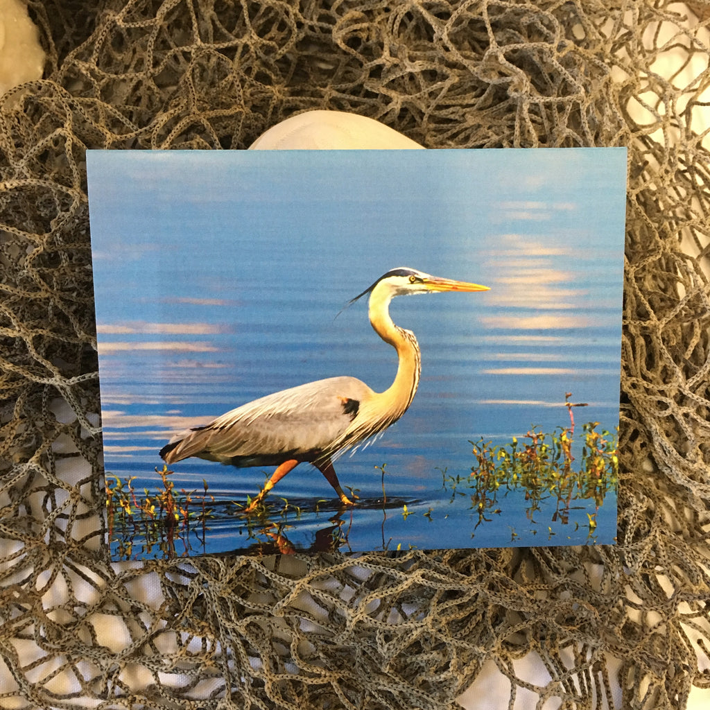 Great Blue Heron Note Card