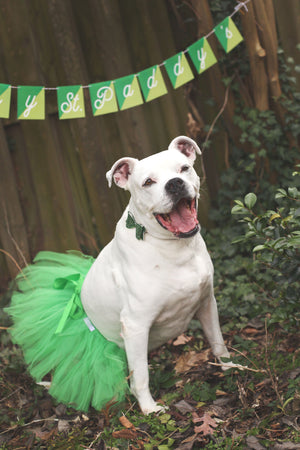 tutu joli st. patricks day dog tutu skirt, green dog tutu xs, green dog tutu s, green dog tutu size m, green dog tutu size L, green dog tutu size xl, green dog tutu size xxl, st patty dog tutu size xxxl. large dog tutu for st patricks day holiday, dog marathon tutu, dog running outfit, green pet tutus, St. Patrick's pet costume, dog marathon accessories, pet running clothing, pet green dress, shamrock run tutu for dogs, shamrock run green tutu for pets, green party outfit for dogs