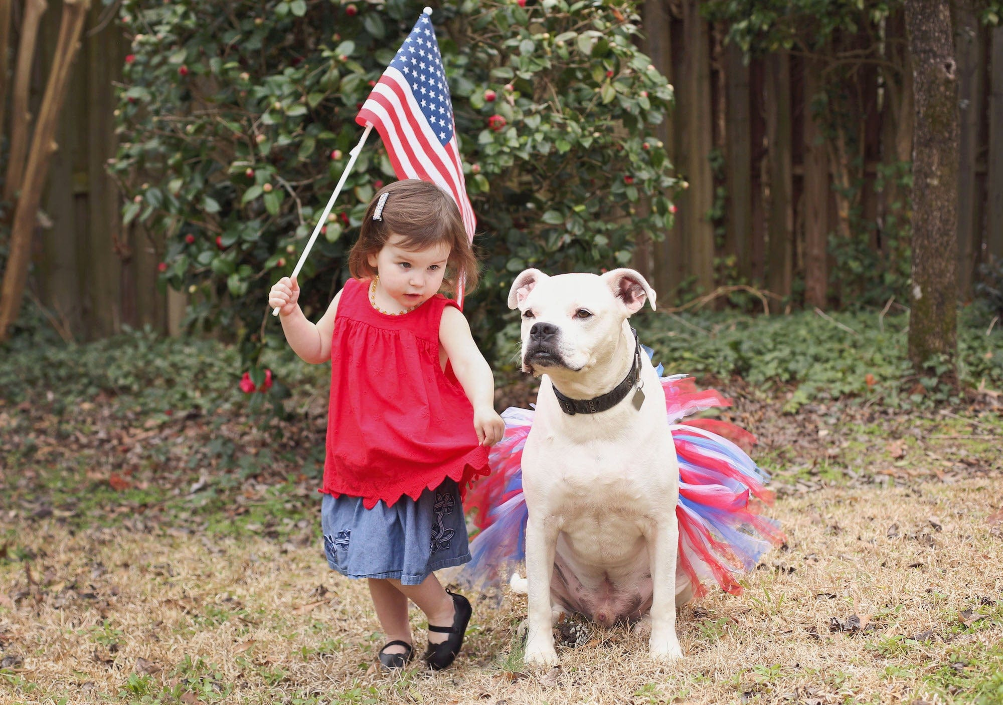 tutu joli 4h of July dog tutu skirt, red white and blue dog tutu xs, blue dog tutu s, red dog tutu size m, white dog tutu size L, independence day dog tutu size xl, large dog tutu size xxl, 4th of july dog tutu size xxxl. large dog tutu american holiday, dog 4th of july tutu and accessories, dog running outfit, american flag pet tutus, american pet costume, pet dress red white blue, halloween dog tutu, birthday tutu for dogs, christmas tutu for dogs, dog christms stuffers