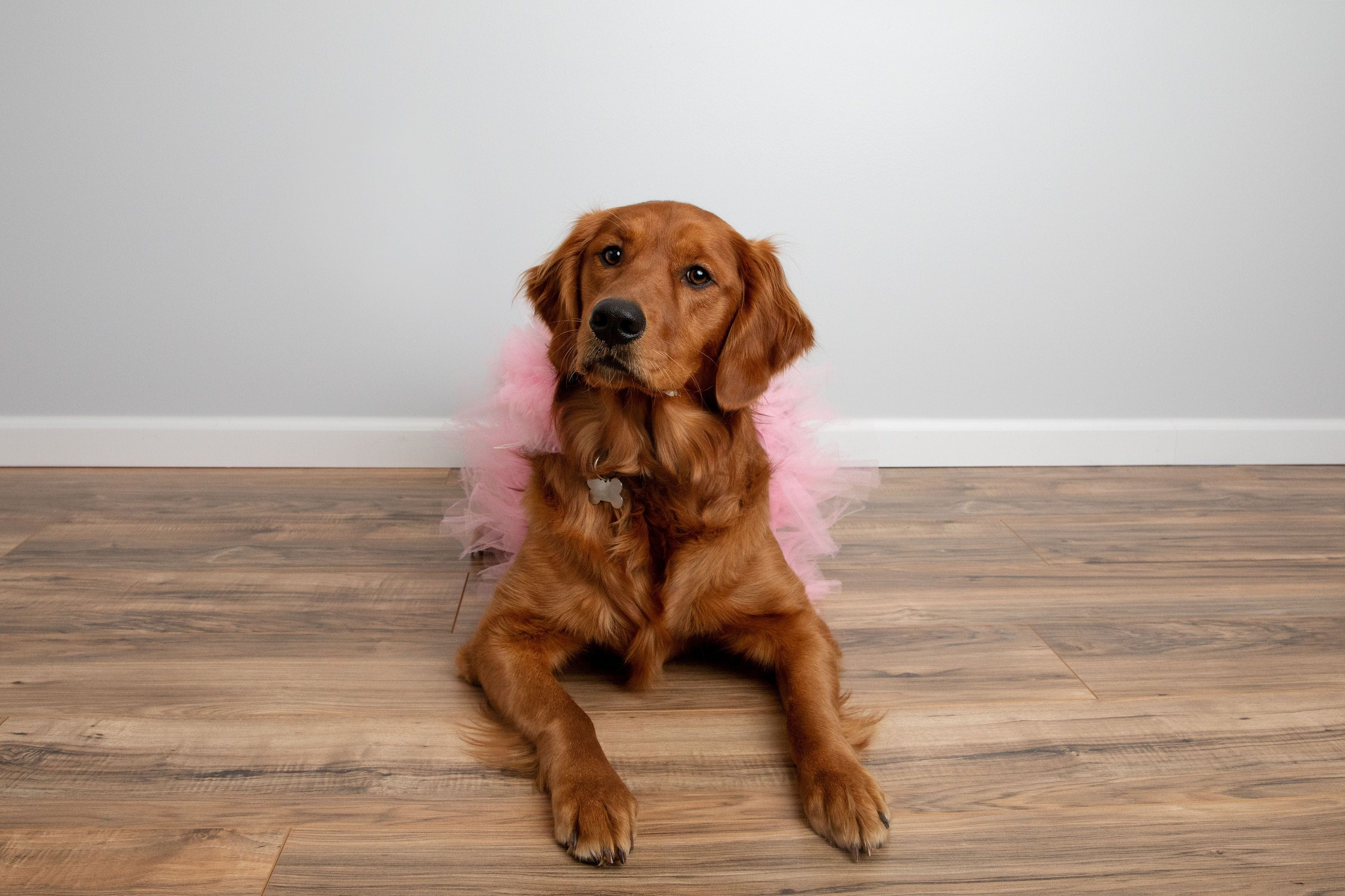 large dog tutu, tutu joli, extra large dog tutu, pet tutu, pet accessories, dog outfit XXL, tutu joli light pink dog tutu skirt, light pink dog tutu xs, light pink dog tutu s, pink dog tutu size m, pink dog tutu size L, light pink dog tutu size xl, pink dog tutu size xxl, pink dog tutu size xxxl. large dog tutu in pink, pink dog birthday tutu, dog birthday outfit, pink pet tutus, light pink pet costume, dog princess outfit pink