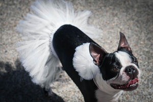 LARGE DOG WHITE TUTU WEDDING