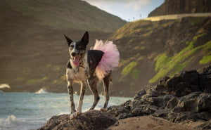 extra large dog tutu light pink by tutu joli, marathon tutu for dogs, running tutu for dogs, tutu run outfit for pets
