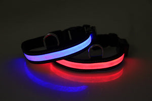 ASIA LED Collar & Leash