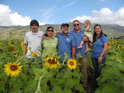 Pacific Biodiesel sunflowers