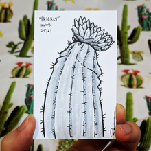 A drawing of a rare flowering cactus plant that looks like a penis