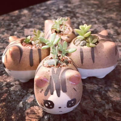 Cartoon Cat Planter Pots