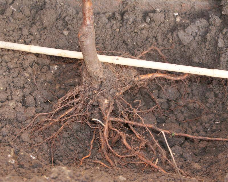 Winter - a fantastic time for planting Fruit trees