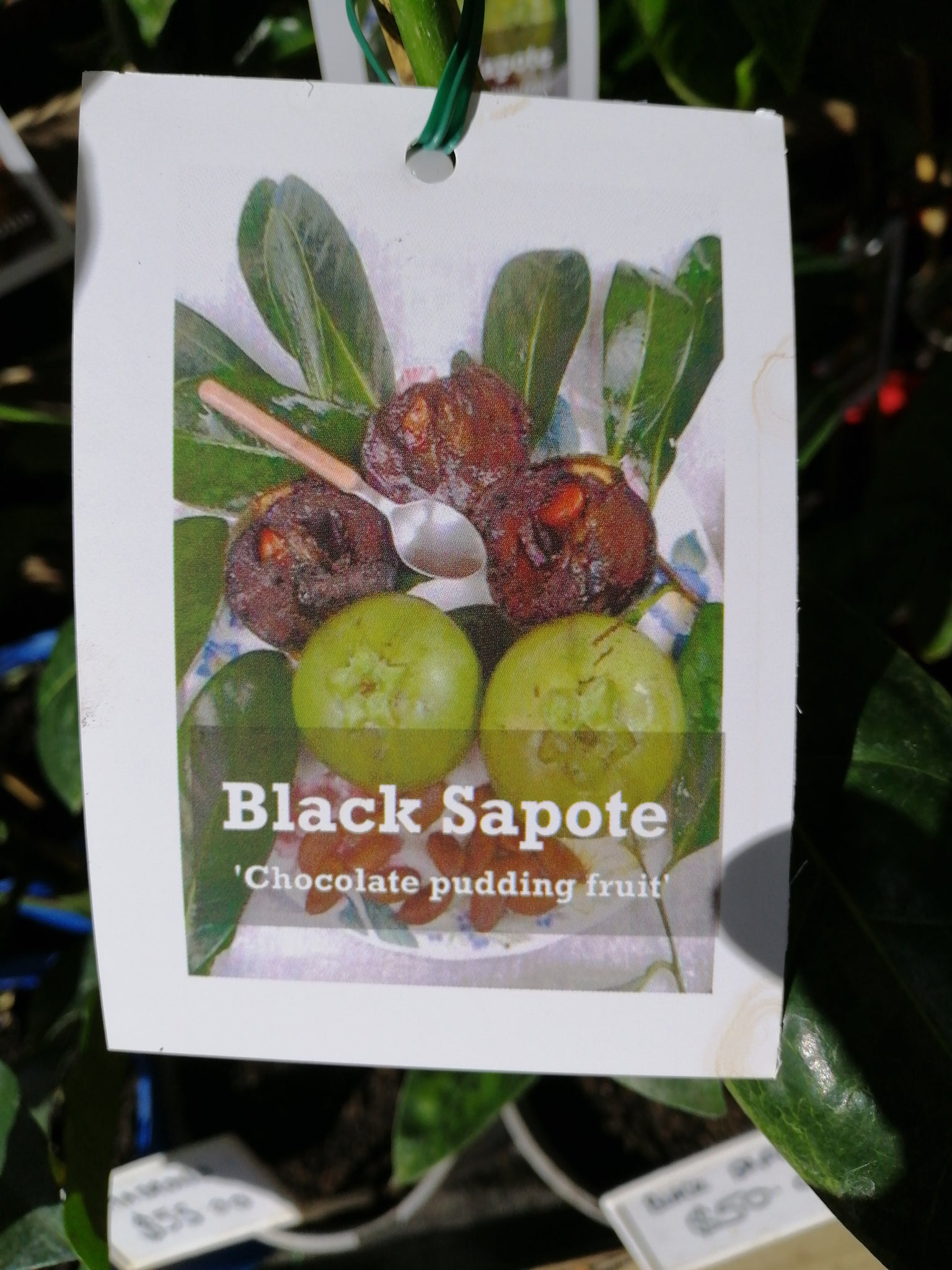 Black Sapote/ Chocolate Pudding Fruit