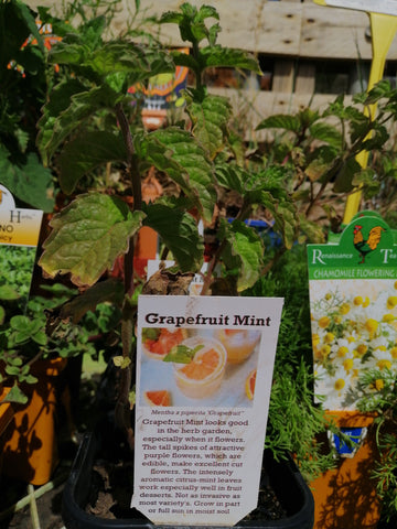 Mint - Grapefruit